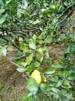 1 Turucu Orchard 5