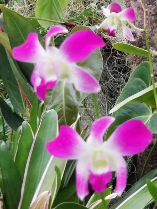 4 Botanical Gardens 12