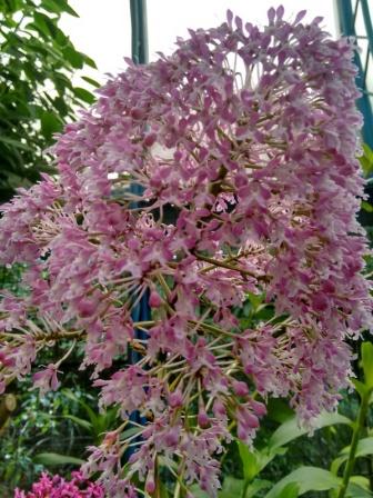 4 Botanical Gardens 23