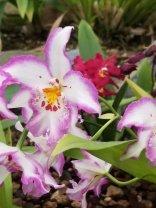 4 Botanical Gardens 3