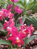 4 Botanical Gardens 4