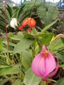 4 Botanical Gardens 5