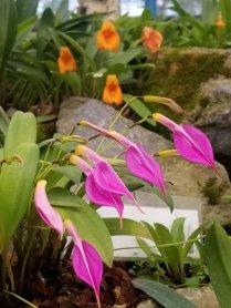 4 Botanical Gardens 6