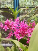 4 Botanical Gardens 8